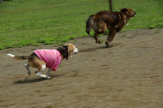 110604-21cookykai dog run