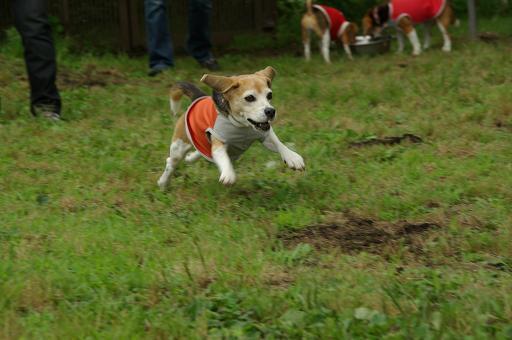110619-09cooky run1