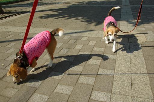 110625-01characooky walk on sagamiharakita park