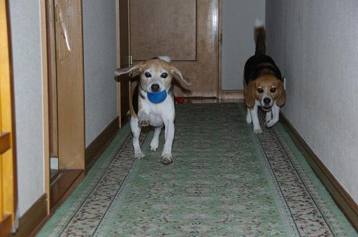 110626-33cookychara run in my home