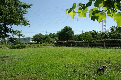 110717-06hirukawa view
