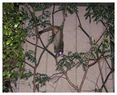 木登り得意だよ~