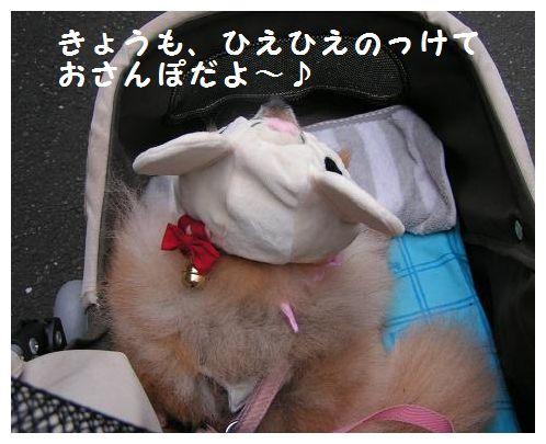 おさんぽいくよ~