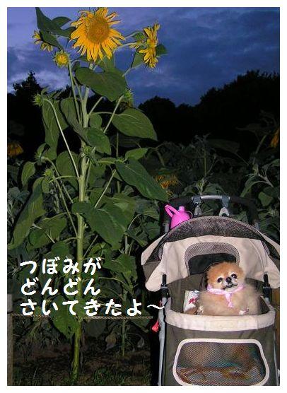 咲いたよ~♪