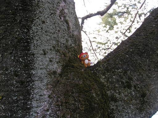 桜の木でリラックス~