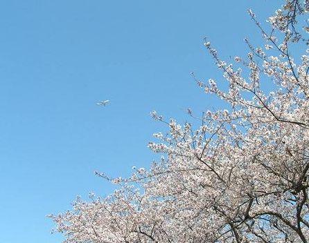 飛行機~♪