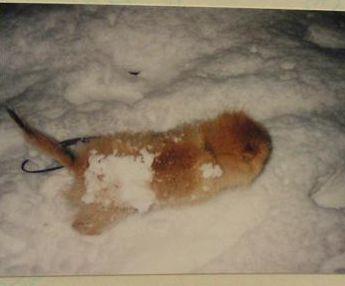 雪まみれだよ~