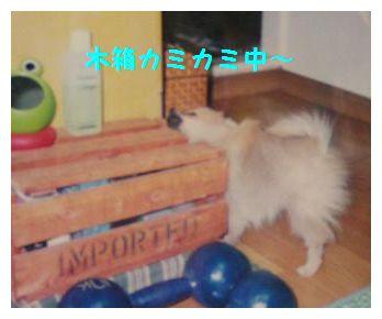 木箱カミカミ~