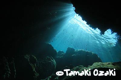 尾崎たまき、タオ島