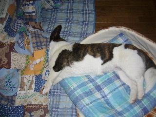 ベッドとコタツ