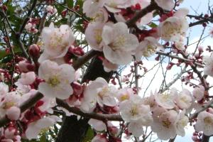 春が来た2