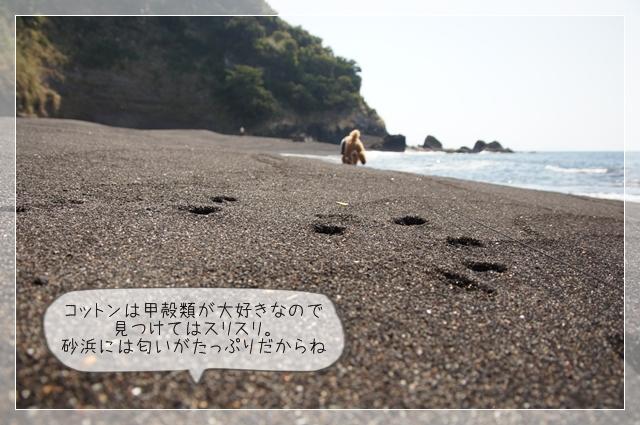 秘密の浜12