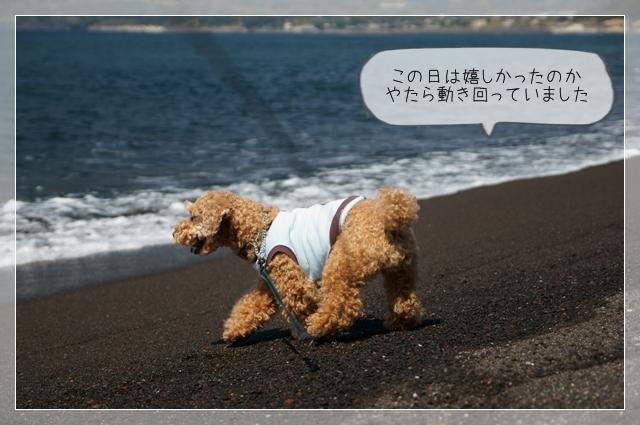 秘密の浜10