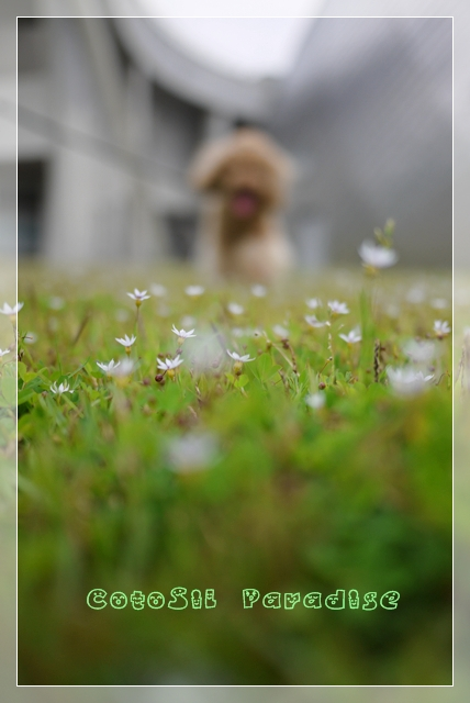 梅雨前散歩06