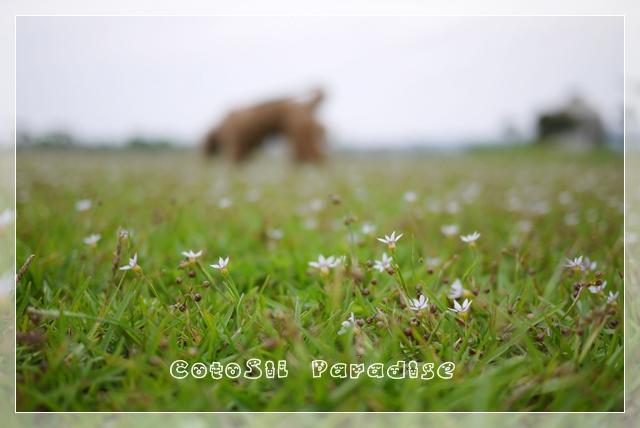 梅雨前散歩05