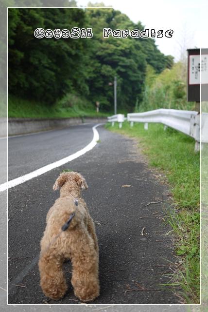 梅雨前散歩17