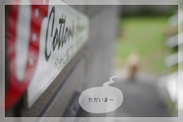 梅雨前散歩25