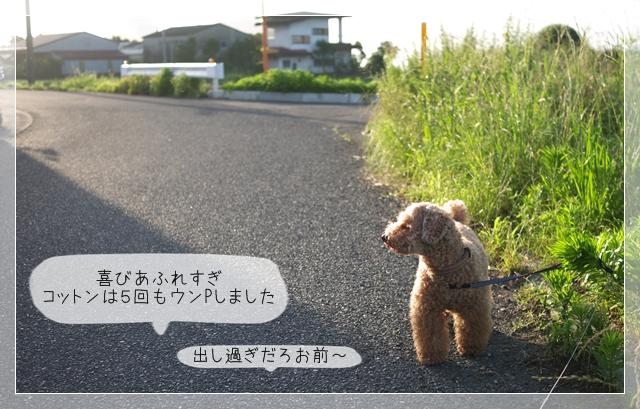 梅雨散歩06