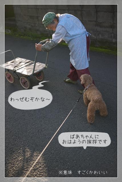 梅雨散歩11