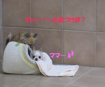 IMG_4211-2.jpg
