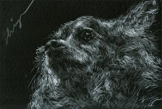 chihuahua9.jpg