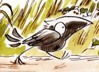crowsw