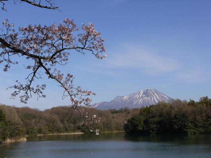 桜と伯耆大山