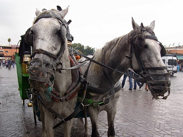 2010.11.17-27 paris,morocco 128
