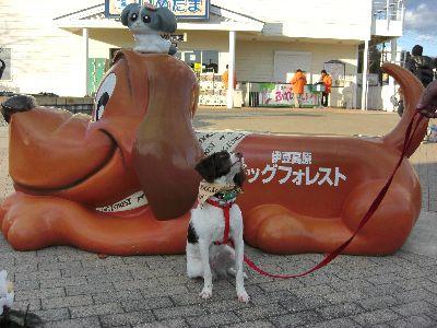 伊豆 旅行 ダリア ドッグフォレスト