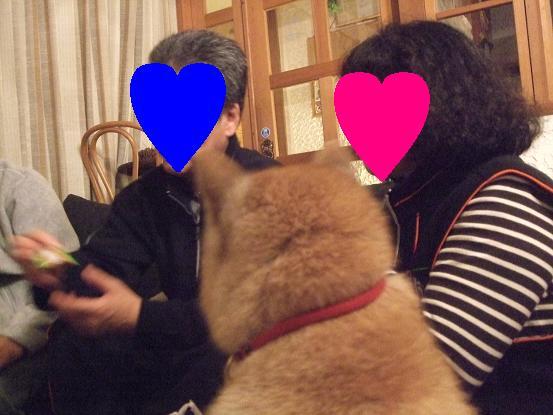 北海道犬10