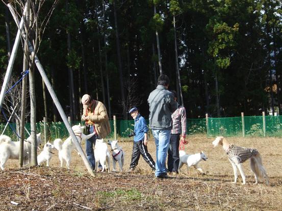 北海道犬19