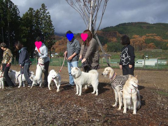 北海道犬20