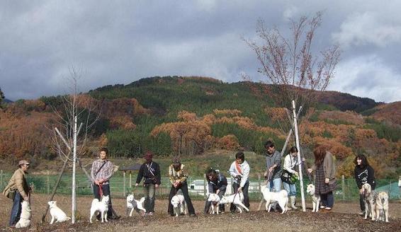 北海道犬21