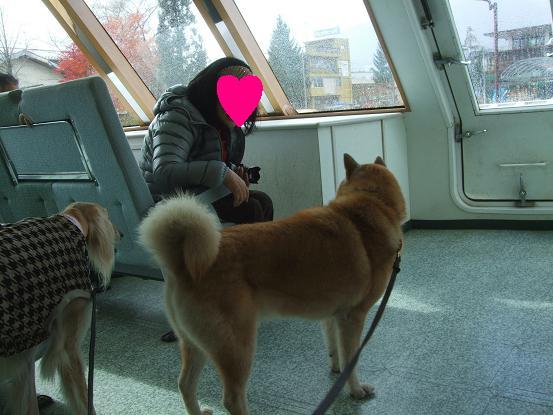 北海道犬23