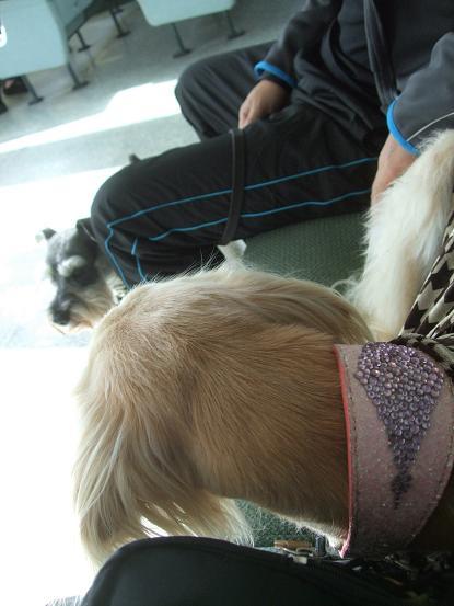北海道犬24