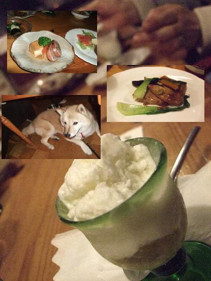 北海道犬8