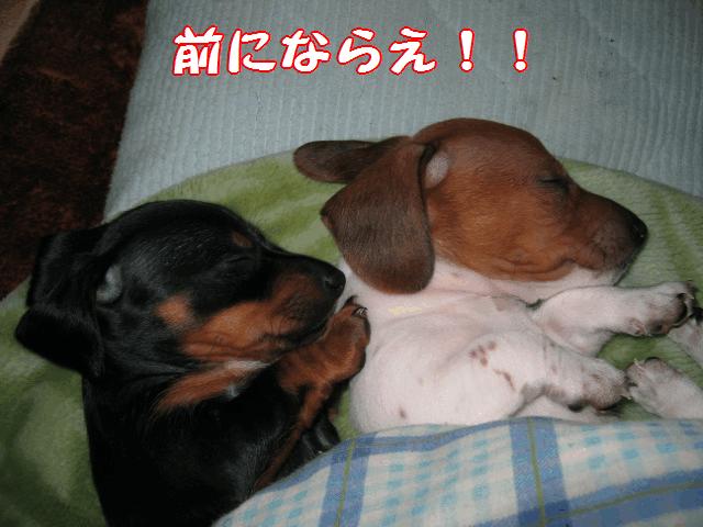 風たん&プッチ