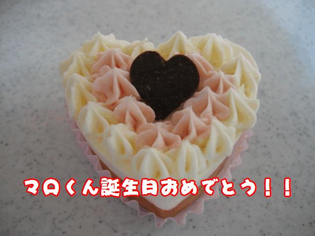 マロくん誕生日!!