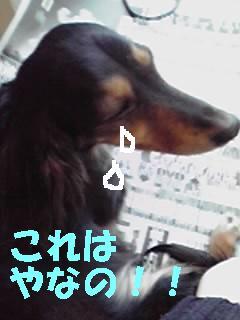 dona23