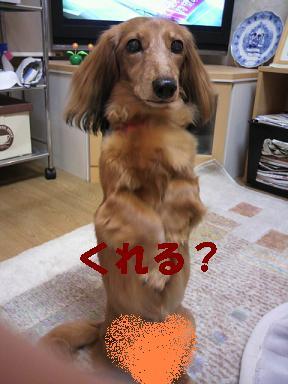 ちるちょい3