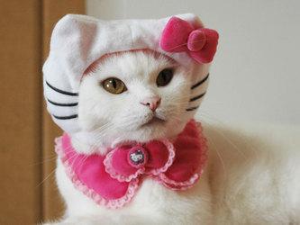 kitty-prin02.jpg