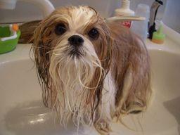 風呂上りシュート