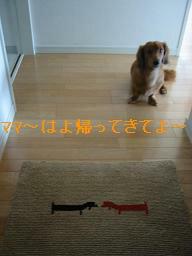 20070922_003212294.jpg