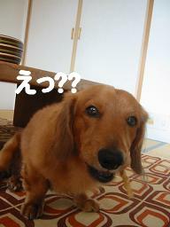 20071011_005743388.jpg
