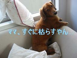 20071016_132236402.jpg