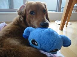 with Stitch...