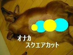 20071029_214915485.jpg