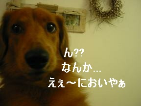 クンクン...♪♪