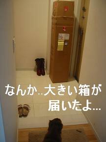 お届け物①