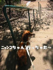 ニャンコちゃん③